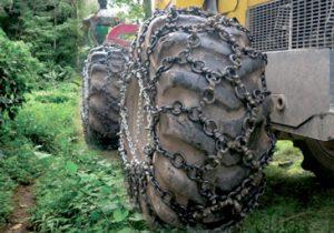 orman zincirleri